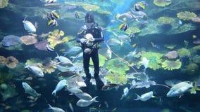 Feeding fish. Diver feeding fish in the big aquarium stock video footage