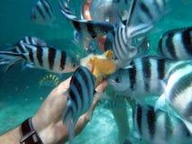 Feeding the fish royalty free stock photos