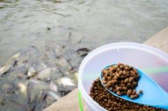 Feeding fish Royalty Free Stock Images
