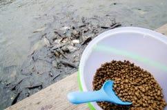Feeding fish Royalty Free Stock Photography