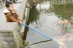 Feeding  fish Royalty Free Stock Image