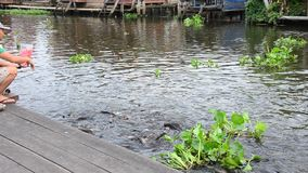 Feeding fish river front of the Nonthaburi temple Thailand. stock video