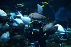Feeding fish in the sea Stock Photos