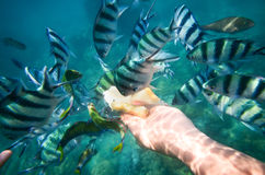 Feeding fish in the sea Royalty Free Stock Photo