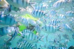 Feeding fish in the sea Stock Photo
