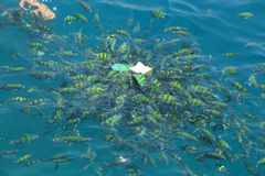 Feeding fish in a tropical sea at Phi Phi island in Krabi Stock Photo