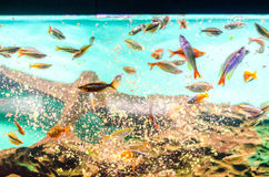Feeding fish Stock Photo