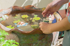 Feeding fish in tub. Royalty Free Stock Images
