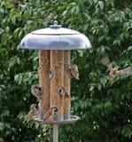 Feeding and Flying Stock Image