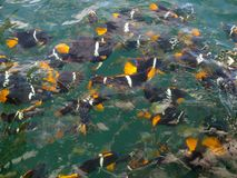 Feeding Frenzy Stock Photos