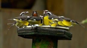 Feeding frenzy Stock Images