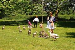 Feeding the geese, Oxford. Stock Photos
