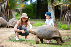 Feeding Giant Turtle. Fun activities in Mauritius. Family feeding giant turtle Stock Photos