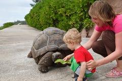 Feeding giant turtle Royalty Free Stock Photos
