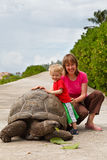 Feeding giant turtle. Mother and baby feeding giant turtle in Seychelles Stock Image