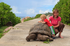 Feeding giant turtle. Mother and baby feeding giant turtle in Seychelles Royalty Free Stock Photography