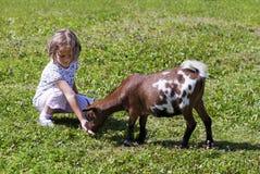 Feeding goat 5 Royalty Free Stock Photo