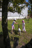 Feeding goat 2 Stock Image