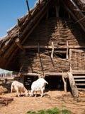 Feeding goats on a historic farm Stock Image