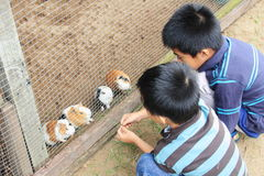 Feeding Guinea Pigs. Two boys feeding guinea pigs in cage at a petting zoo Stock Photo