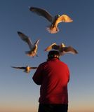 Feeding the Gulls. This image of the person feeding the sea gulls was taken in ME Royalty Free Stock Photo