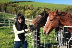Feeding Horse Stock Image