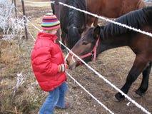 Feeding a horse. Young girl feeding a horse Royalty Free Stock Image