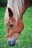 Feeding horse Royalty Free Stock Photo