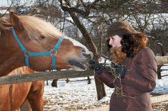 Feeding the horse. Young happy woman feeding horse Royalty Free Stock Photography
