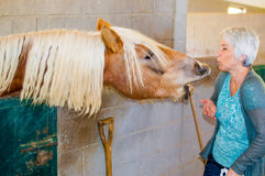 Biting horse. Elderly woman is being attacked by the beautiful hungry biting horse while trying to feed it royalty free stock photos