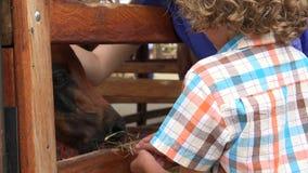 Feeding Horse At Farm stock video footage