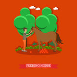 Feeding horse vector illustration in flat style. Vector illustration of horse breeder male feeding horse with fruit. Flat style design element vector illustration