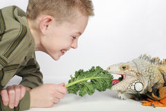 Feeding iguana. Little boy feeding a large hungry pet lizard and laughing Stock Photography