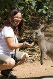Feeding a Kangaroo Stock Photography