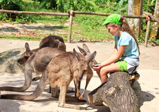 Feeding kangas. Little girl sitting on the log, many kangaroos near her. She is feeding them Royalty Free Stock Photography