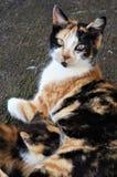Feeding kitten stock images