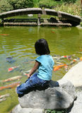 Feeding the Koi Stock Photos