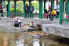 Feeding the koi fish Royalty Free Stock Photo