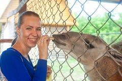 Feeding lama Royalty Free Stock Photos