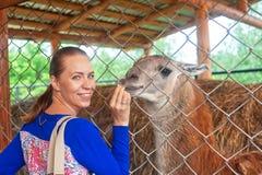 Feeding lama Royalty Free Stock Photography