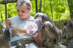 Feeding lemurs Stock Photography