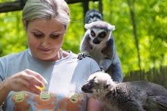 Feeding lemurs Royalty Free Stock Photo