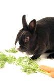 Feeding little bunny Stock Photography