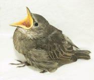 Feeding little hungry bird Royalty Free Stock Image
