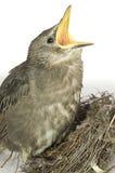 Feeding little hungry bird Royalty Free Stock Photos