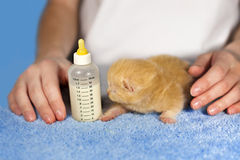 Feeding little kitten Stock Photography