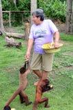 Feeding Monkeys Stock Photos
