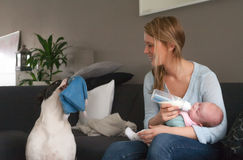 Feeding my baby and the dog wants to play Stock Image