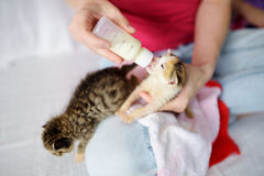 Feeding orphan kitten with milk replacement Stock Image