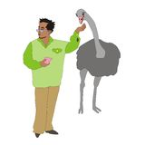 Feeding ostrich Stock Image